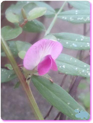 雑草の花.jpg